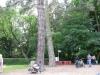 große Bäume mittendrin